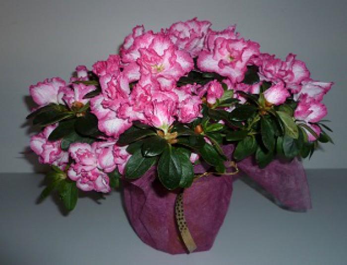 les fleurs de la grange rosier horticulteur jardin. Black Bedroom Furniture Sets. Home Design Ideas