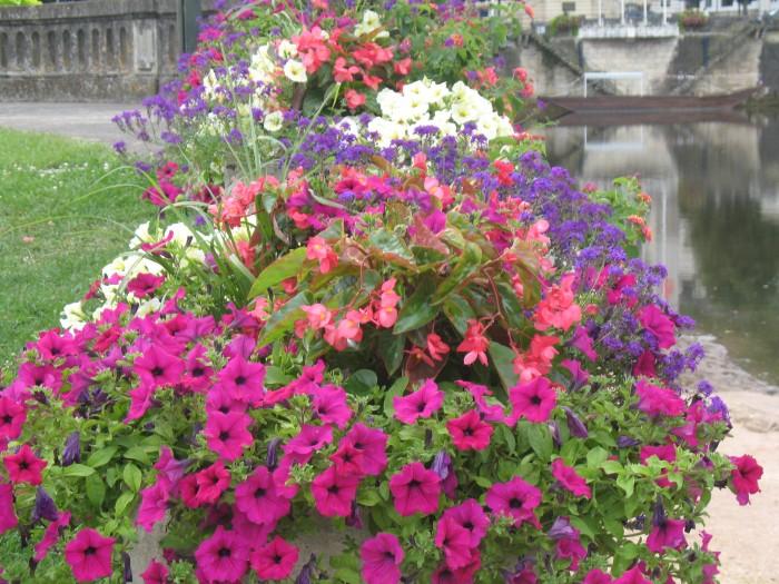plante m dit retombante les fleurs de la grange earl. Black Bedroom Furniture Sets. Home Design Ideas